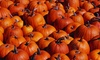 Toluca Lake Pumpkin Festival - South Valley: Haunted-Maze and Petting-Zoo Visit for Four, Six, or Eight at Toluca Lake Pumpkin Patch (Up to 66% Off)