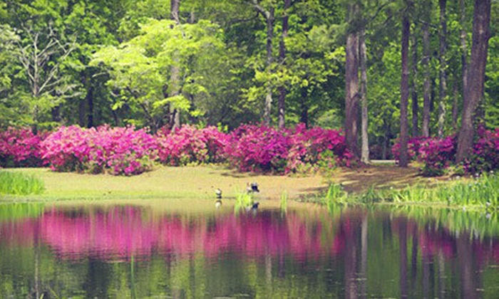 Brookgreen Gardens - Between Murrells Inlet and Pawleys Island: Seven-Day Admission for Two or Four at Brookgreen Gardens (Up to 55% Off)