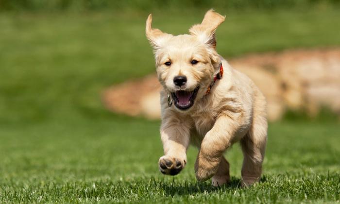 Social Pet Hotel & Daycare - Pineville: 5 Days of Dog Daycare from Social Pet Hotel & Daycare (49% Off)