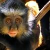 Sacramento Zoo – Up to 47% Off Zoo Fun-Day for Four