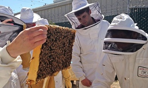 Round Rock Honey: Three-Hour Introductory Beekeeping Class for One or Two at Round Rock Honey (Up to 68% Off)