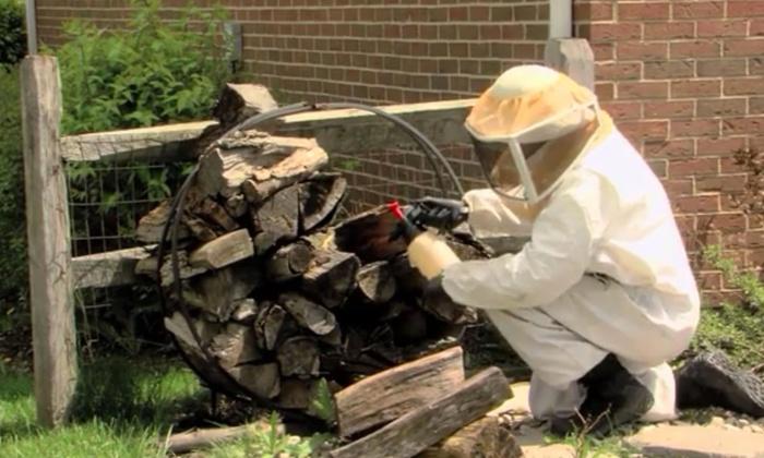 Greenix Pest Control - Multiple Locations: $109 for $199 Worth of Pest-Control Services — Greenix Pest Control