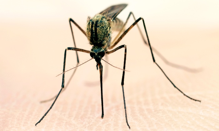 NaturaLawn of America - Wilmington-Newark: Two Mosquito-Control Barrier Treatments from Mosquito Ranger (Up to 53% Off)