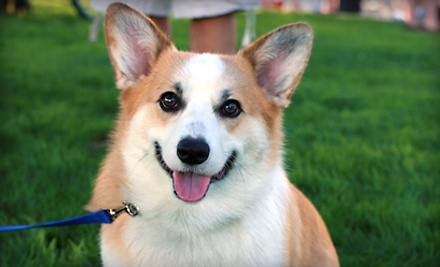 Dog Teeth-Cleaning Treatment (a $272 value) - Superior Veterinary Care in Lincoln