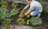 Tumino's Garden Centre - Mount Dennis: $20 for $40 Worth of Plants and Supplies at Tumino's Garden Centre