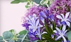 Van Luyk Greenhouses and Garden Centre - Hamilton Road: $20 for $40 Worth of Plants, Flowers, and Giftware at VanLuyk Garden and Nursery Centre