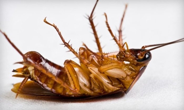Terminix - Oklahoma City: $69 for a Pest-Control Treatment with Free Termite Inspection from Terminix ($189 Value)