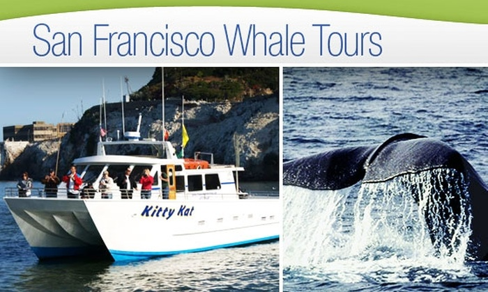 San Francisco Whale Tours - Marina: Weekday Whale Watching Trip on a Catamaran with San Francisco Whale Tours