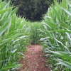 Up to 53% Off Admission to Corn Maze in Eureka