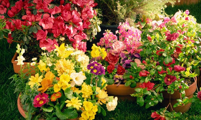 Woodside Nursery & Garden Center - Patchogue: $15 for $30 Worth of Perennials, Annuals, Trees, and Shrubs at Woodside Nursery & Garden Center in Patchogue