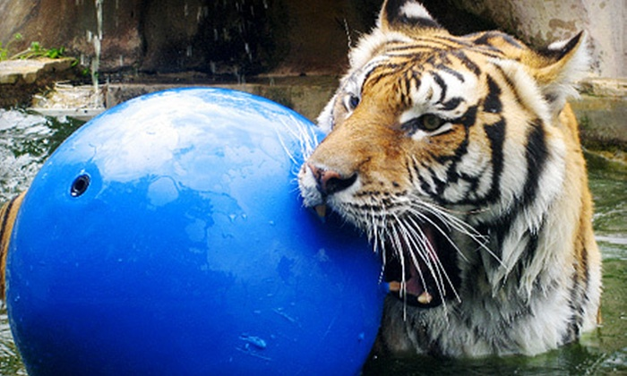 Austin Zoo - Southwest Travis: Zoo Outing for Two or Four to Austin Zoo and Animal Sanctuary (Up to 53% Off)
