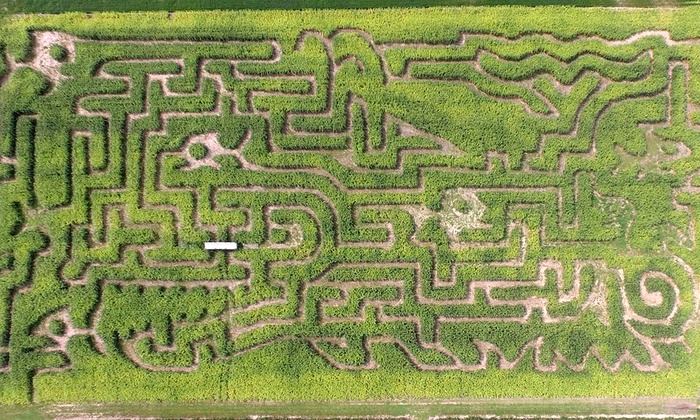 Schwallier's Country Basket - Alpine: $13 for Corn Maze Visit for Four at Schwallier's Country Basket ($24 Value)