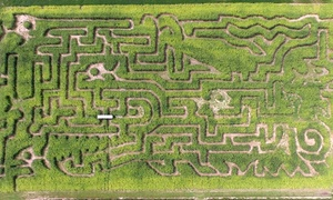 Schwallier's Country Basket: $13 for Corn Maze Visit for Four at Schwallier's Country Basket ($24 Value)