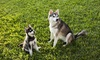 Pet Yard Keepers - Seattle: One, Three or Six Months of Pet Waste Removal from Pet Yard Keepers (Up to 48% Off)