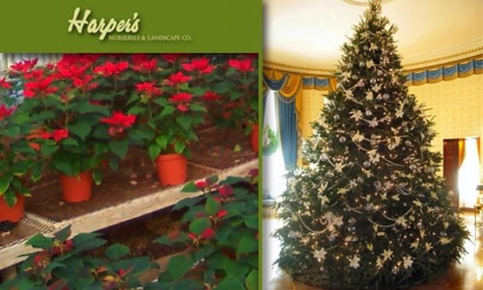 Harper's Nursery & Landscape Co.  - South Scottsdale: $20 for $40 Worth of Plants at Harper's Nursery & Landscape