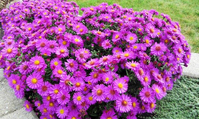 Budd Gardens Perennials and Hostas - Blackburn Hamlet : C$18 for C$30 Worth of Flowers and Plants at Budd Gardens