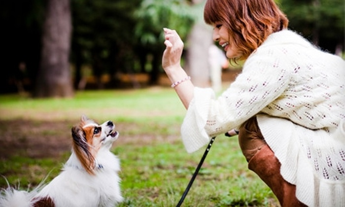 Pawsitive Steps - Downtown Nashville: Five Dog Walks or Two-Day Dog-Sitting Services from Pawsitive Steps