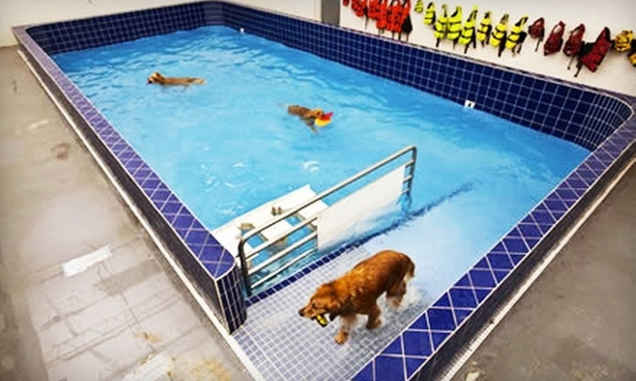 Pet Depot - Lutherville - Timonium: $10 for One Dog Swim Session ($20 Value)  or $8 for One Self-Service Dog Wash ($16 Value) at Pet Depot in Timonium.