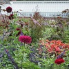 $10 for Two Admissions to Blithewold Mansion & Gardens