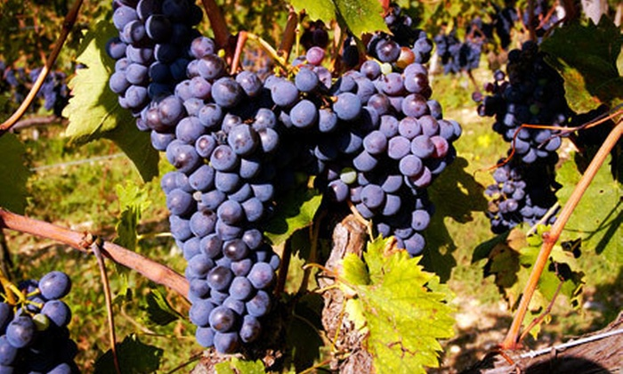 Beer & Wine Hobby - Woburn: $35 for a Limited-Edition Chilean Winemaking Class for Two at Beer & Wine Hobby in Woburn ($70 Value)