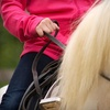 Up to 56% Off Horseback-Riding Lessons in Wilton