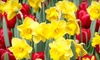 American Meadows: $46 for a Fall-Planted Bulb Kit from American Meadows ($85.94 Value)