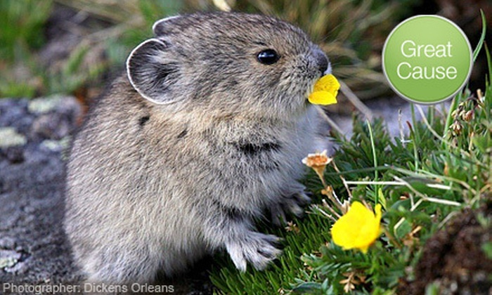 Rocky Mountain Wild - LoDo: If 40 People Donate $10, Then Rocky Mountain Wild Can Train Two Volunteers to Collect Survey Data on the American Pika
