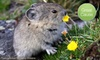 $10 Donation to Protect the American Pika