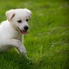 Up to 76% Off Dog-Care Services in Henderson