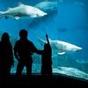 The Maritime Aquarium at Norwalk – Up to 71% Off Membership