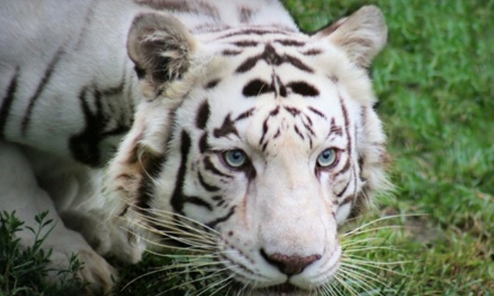 G.W. Exotic Animal Memorial Park - Wynnewood: $10 for Two Passes to G.W Exotic Animal Memorial Park in Wynnewood (Up to $20 Value)