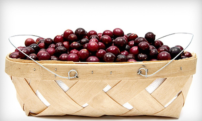 Barber Berry Farm - Millbrook: $5 for One Gallon of Pick-Your-Own Muscadine Grapes at Barber Berry Farm ($10 Value)
