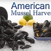 $7 for Whitewater Mussels in North Kingstown