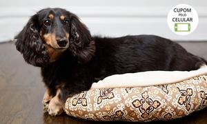 PATA E PELO ESTÉTICA CHIQUE: Pata e Pelo Estética Chique - Asa Norte: banho + tosa higiênica + hidratação para cães de pequeno e médio porte