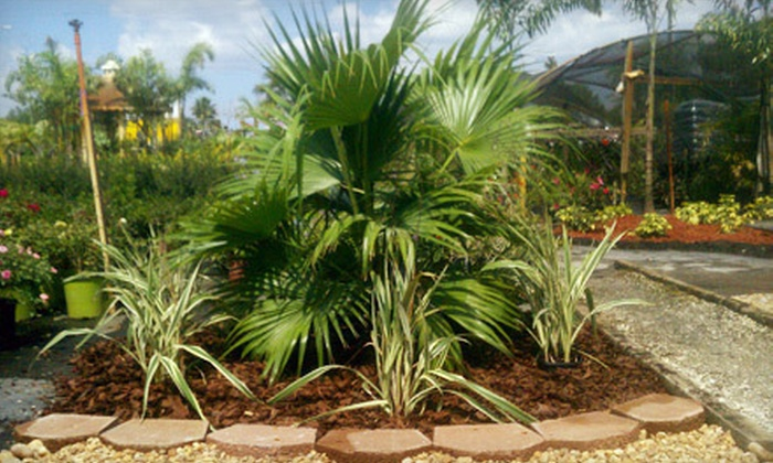 The Plant Stop - Shady Oaks Ranches: Chinese-Fan or Robellini Palm-Tree Packages with Shrubs and Mulch at The Plant Stop in Land O' Lakes (Up to Half Off)