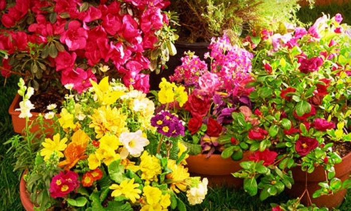 Lake Ridge Nursery, Inc. - Woodbridge: $15 for $30 Worth of Plants, Flowers, Gifts, and Home-Décor Accessories at Lake Ridge Nursery Inc. in Woodbridge