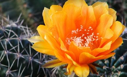 Desert Botanical Garden - Desert Botanical Garden in Phoenix