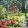 Half Off at Oriental Garden Supply in Pittsford
