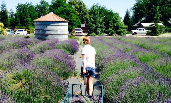 Pageo Lavender Farm - Turlock: Up to 23% Off Lavender Boxed Lunches at Pageo Lavender Farm