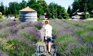 Pageo Lavender Farm: Up to 23% Off Lavender Boxed Lunches at Pageo Lavender Farm