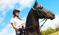One-Hour Horse Riding Lesson or Hack at Edinburgh & Lasswade Riding Centre (50% Off)
