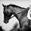 Up to 64% Off Horseback-Riding Lessons in Truro