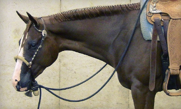 Lightning Bar Equine Services, LLC - Cohoctah: One or Four Private Horseback-Riding Lessons at Lightning Bar Equine Services, LLC in Howell (Up to 70% Off)