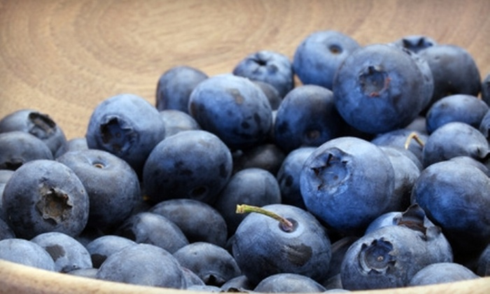 Blueberry Havens - Camp Hill: $7 for Two Gallons of Pick-Your-Own Blueberries at Blueberry Havens ($14 Value)