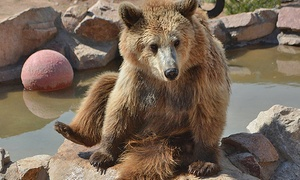 Keepers of the Wild: Admission for Two Adults or Two Adults & Two Children (Ages 12 and Under) at Keepers of the Wild (Up to 48% Off)