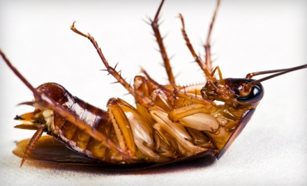 Pest-Control Treatment Plus Termite Inspection (a $189 value) - The Bug Doctor in