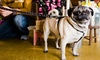 Pets N' Stuff - Kendrick Lake: $15 for $30 Worth of Pet Products at Pets N' Stuff