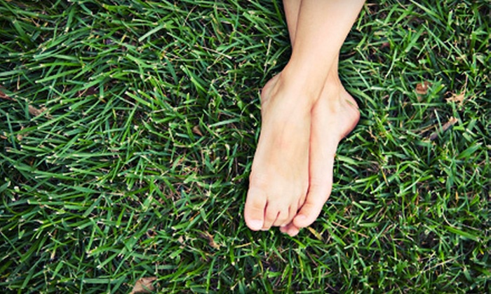 Finerlawn and Landscaping - Sharonville: Lawn-Care Treatments from Finer Lawn and Landscaping (Up to 63% Off). Four Options Available.
