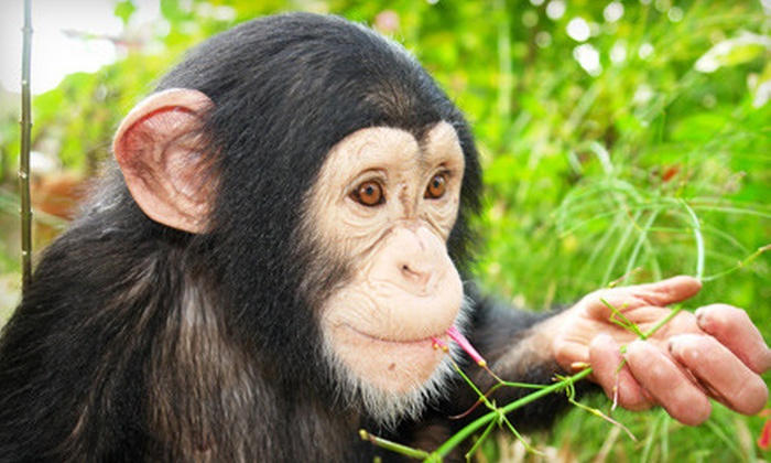 Suncoast Primate Sanctuary - Palm Harbor: $20 for Suncoast Primate Sanctuary Visit for Four and One Bag of Monkey Feed in Palm Harbor (Up to $41 Value)