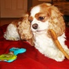 Jumbo Natural Dog Bone 12-Pack